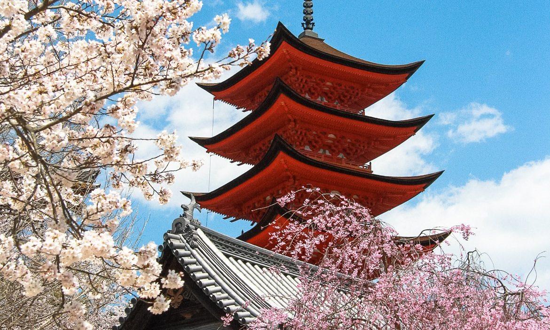 japan-kirschbluete