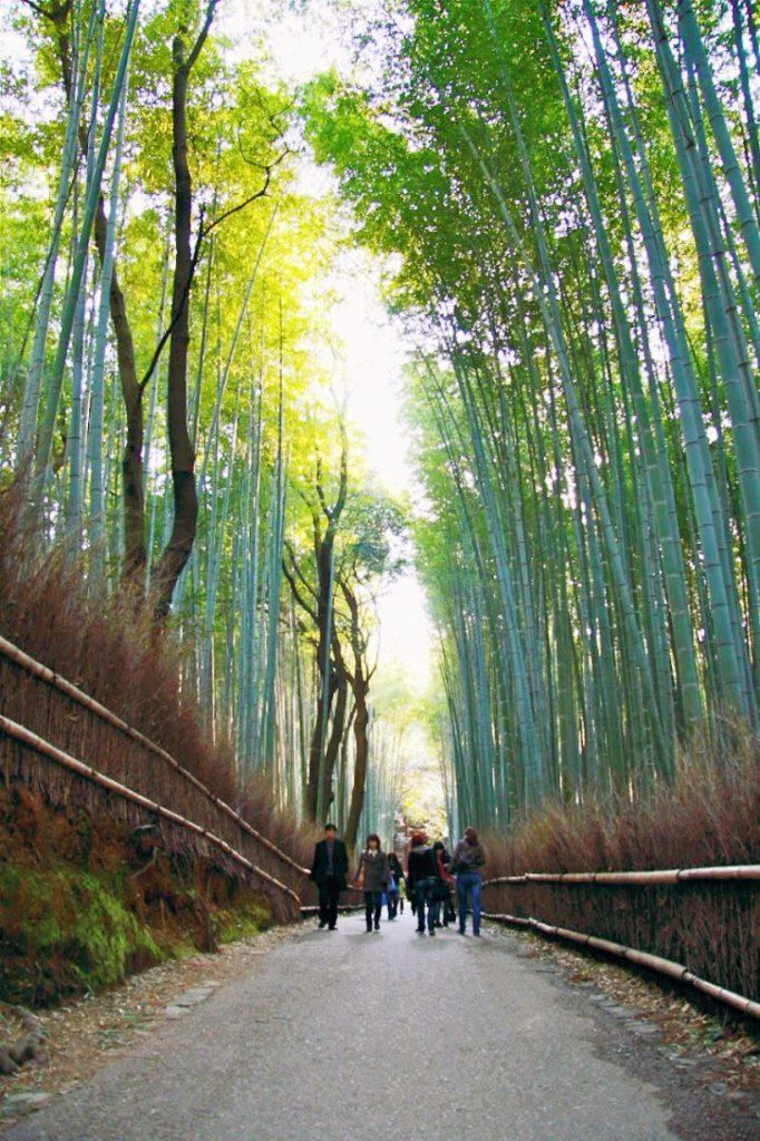 backpacking-japan-kirschblute-reiseroute-arashiyama-bambushain