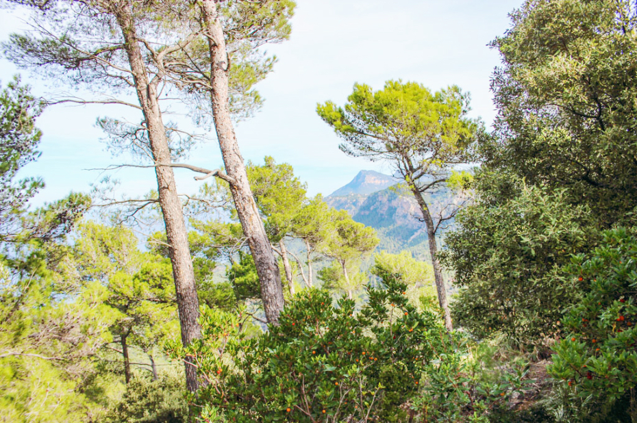 backpacking-mallorca-banyalbufar-wandern-baume