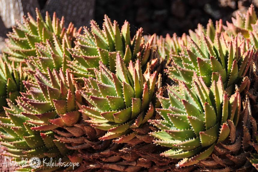 fuerteventura-antigua-botanischer-garten