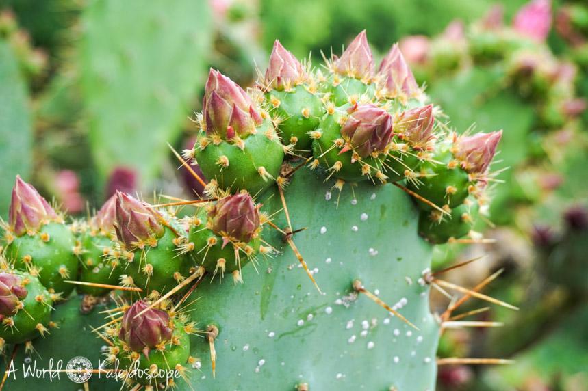 meran-tipps-kaktus